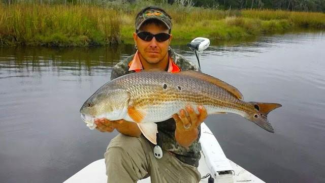 Inshore Redfish