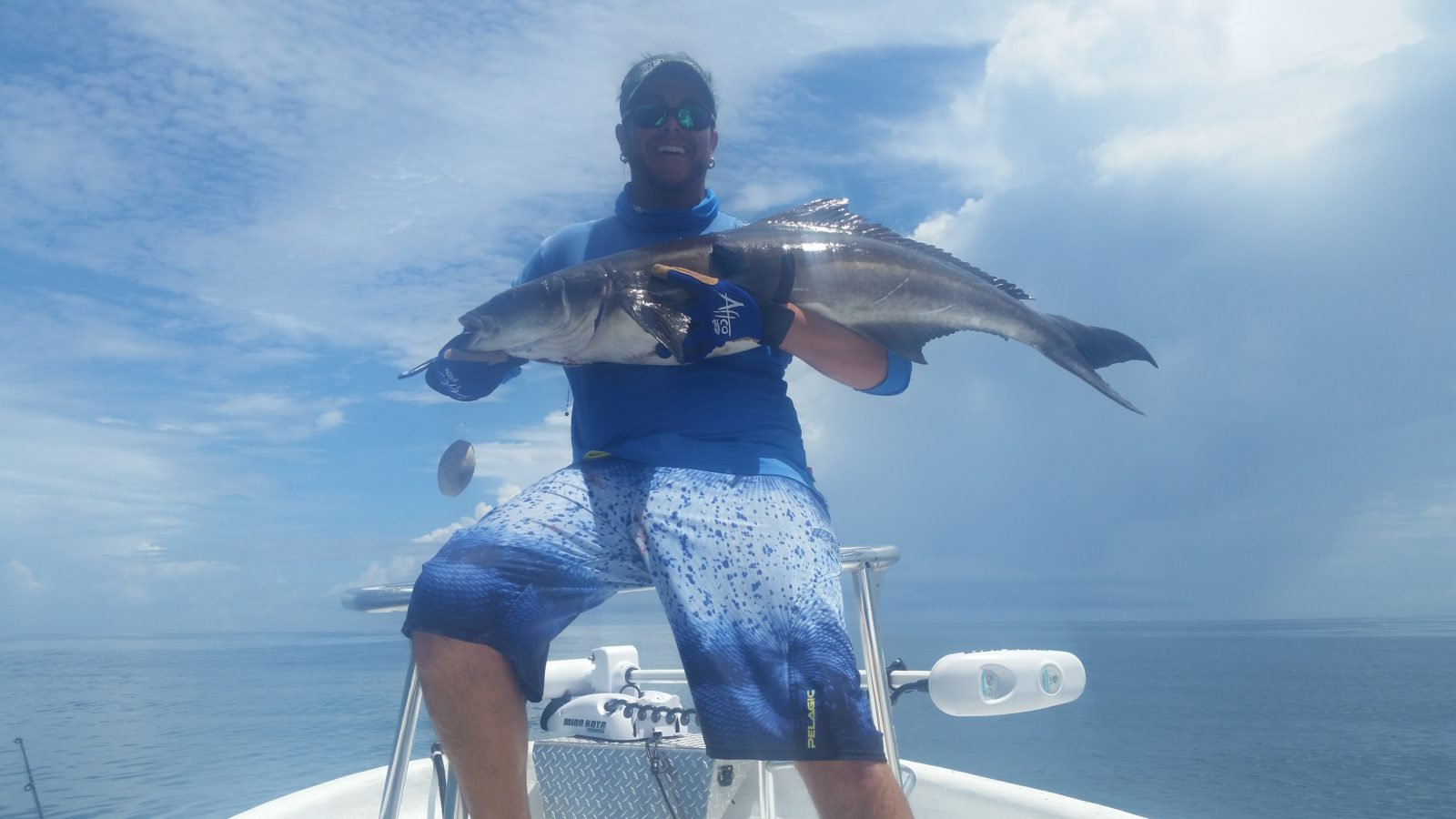 34lbs Cobia caught out of Ponce Inlet